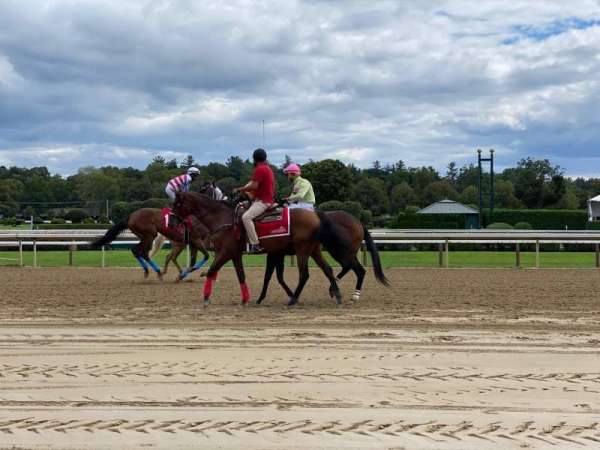 Saratoga Race Course, section: At Track